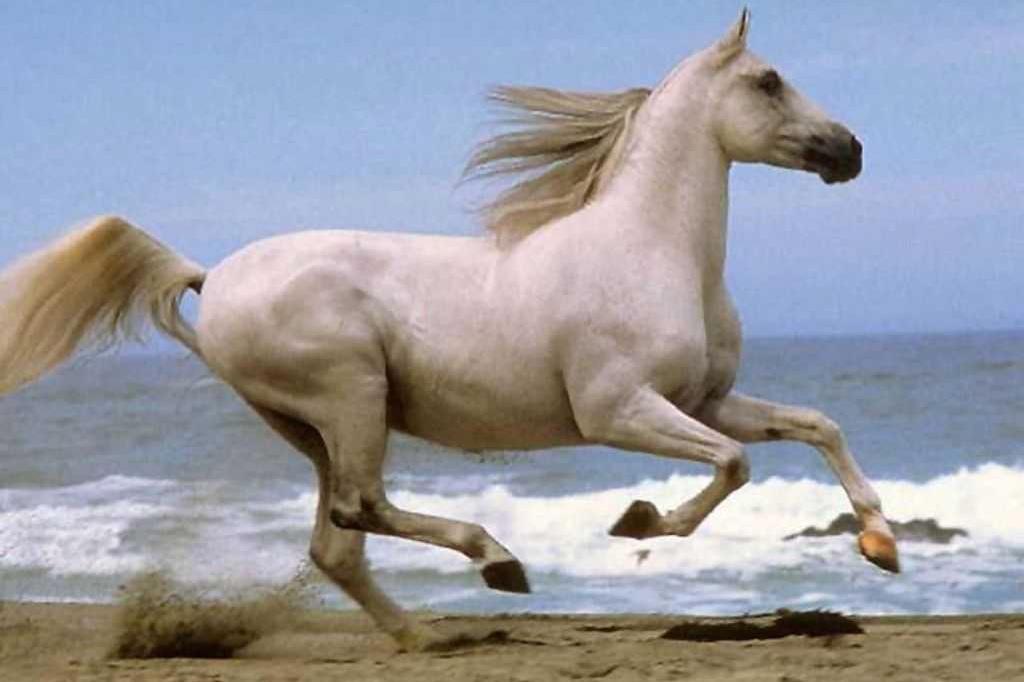 Horse-running-beach